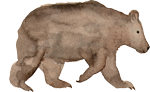 baby bear watercolor illustration